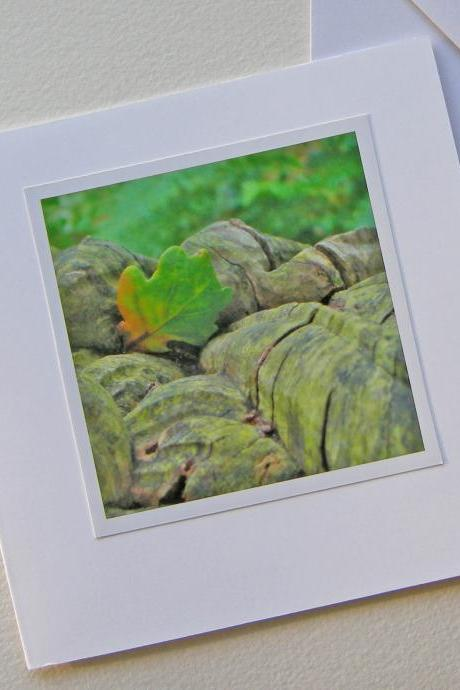 Oak tree and leaf photo card