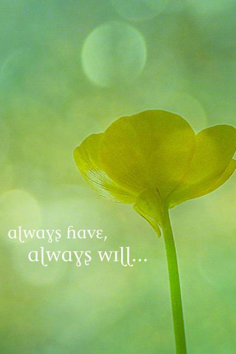Always Have, Always Will -- Fine Art Photography -- Flower, Floral, Nature, Typography, Decor, Wall Hanging