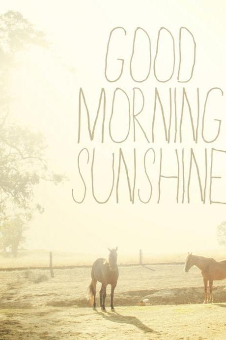 Good Morning Sunshine. Horse Photo. Fine Art Photography. Typography. Shabby Chic. Size 10'x10'