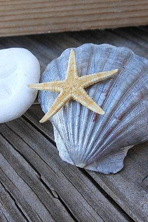 Seashell Barrette Handmade Hair Accessory Design using Natural Scallop Sand Dollar and Starfish