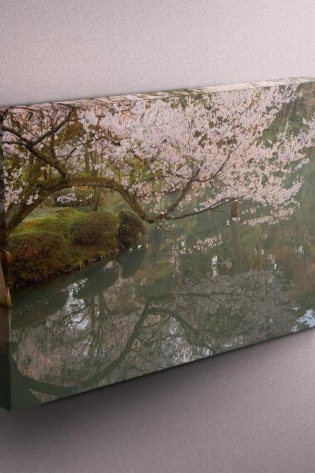 Cherry Blossoms - Fine Art Photograph on Gallery Wrapped Canvas - 16x12' & more