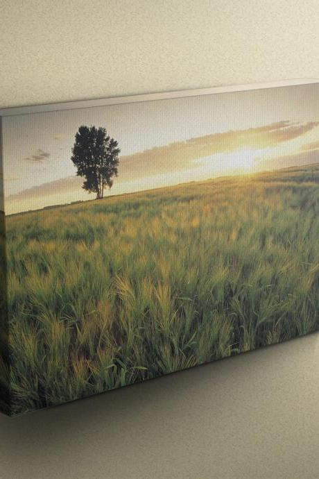 Sunset Barley Field - Fine Art Photograph on Gallery Wrapped Canvas - 16x12' & more
