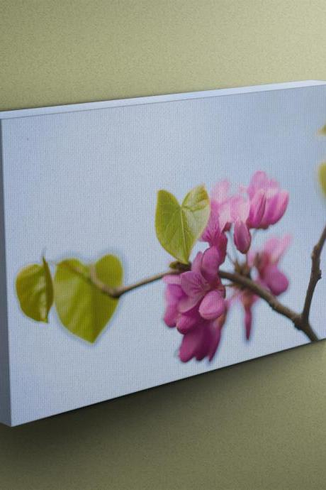 Pink Blossom - Fine Art Photograph on Gallery Wrapped Canvas - 16x12' & more