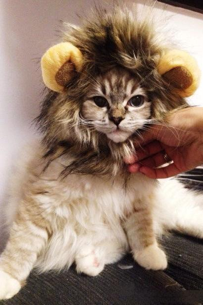 Lion's Mane Cat Hat cat's toy like lion mane hat Stuffed & Plush Toy Lion's Mane Hat for Cats