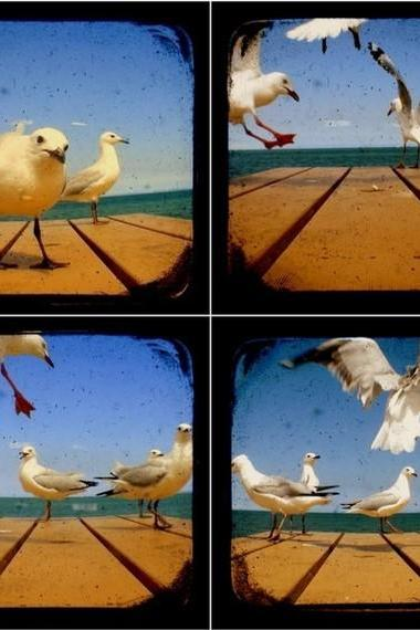 Seagull Photography Set of Four 5x5 TtV Bird Photo Prints
