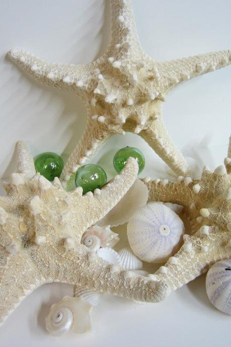Nautical Decor Starfish - Beach Decor Natural White Knobby Starfish, 6-8in