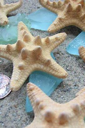 Starfish Beach Decor - Nautical Decor Knobby Starfish for Beach Weddings - 3pc, 1.5-2.5in, Brown