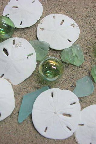 Sand Dollar Beach Decor Shells - Nautical Decor Large Sand Dollars for Beach Weddings -12pc