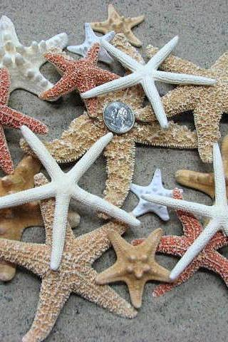 Beach Decor Starfish Collection - Nautical Decor or Beach Wedding Starfish Assortment, 17PC