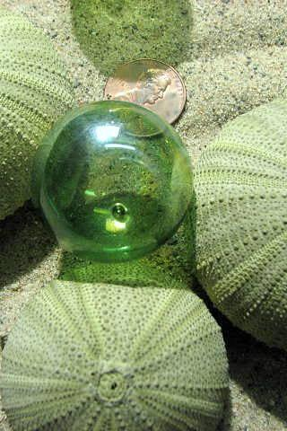 Beach Decor Sea Urchin Seashells - Nautical Decor Sea Urchins for Beach Weddings, Green 1pc