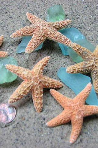 Starfish Beach Decor - Nautical Decor, Crafts, or Beach Wedding Sugar Starfish - 2-4inch, 12pc