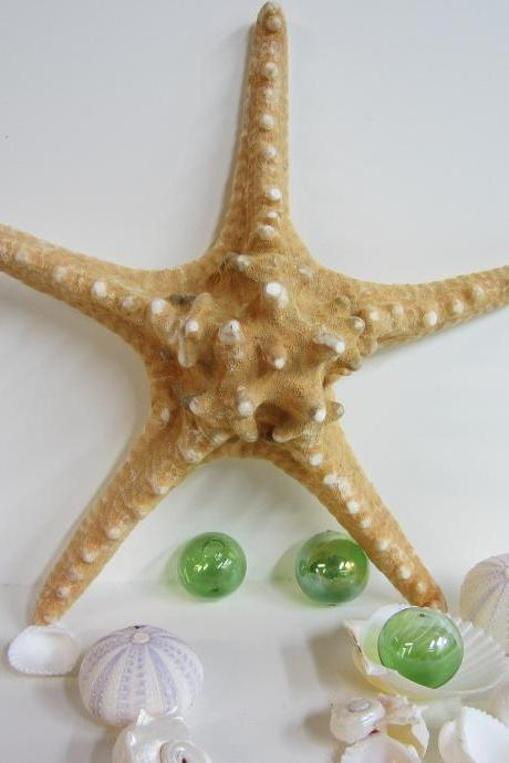 Beach Decor Starfish - Nautical Decor Brown Knobby XL Starfish, 8-10 inch