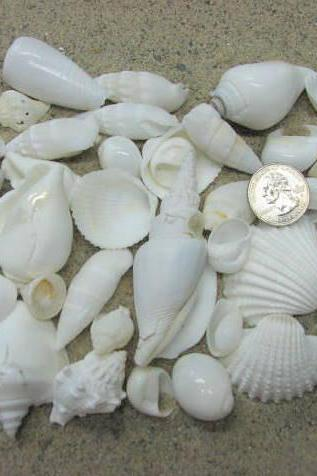 Beach Decor White Shell Mix - Nautical Decor Beach Wedding Seashell Asst in White, 1.25 lbs.
