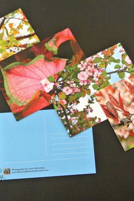 Set of Four Flower Postcards
