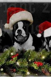 Santa Hat Christmas Doggies