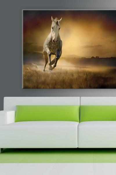 16x10 Digital printed Canvas vintage wild horse to your wall, old white mare, wild mustang (size: 16x10 inch plus border).