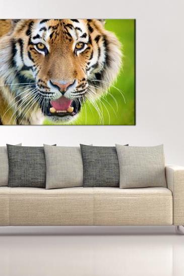16x10 Digital print modern Canvas wild tiger to your wall, (size: 16x10 inch plus border).