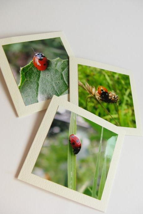 Ladybirds small photo notecards (set of 3)