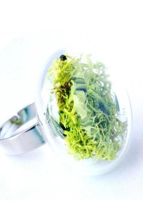 Real Dried Moss Glass ring