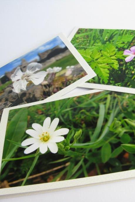 Bright Wild flowers photo notecards